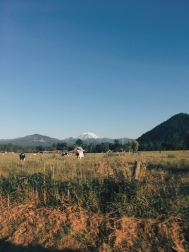 Enumclaw, WA view of Mt. Rainer