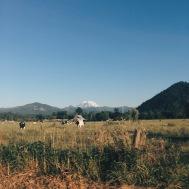 Enumclaw, WA view of Mt. Rainer